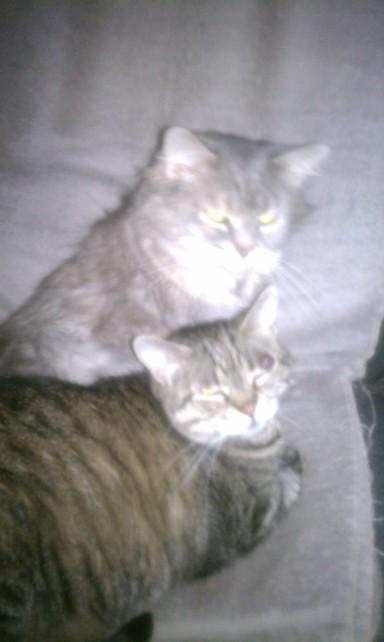 Cinmouii & Tiggami
